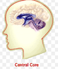 Localisation of the brain - Mrs Harris Psychology Blog